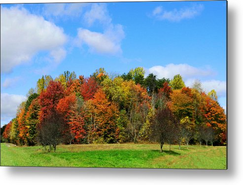 Trees Metal Print featuring the photograph Fall In North Carolina by Sheila Kay McIntyre