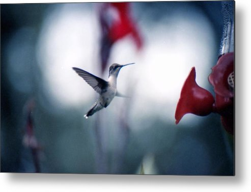 Photography Metal Print featuring the photograph Hummingbird by Lynnette Johns
