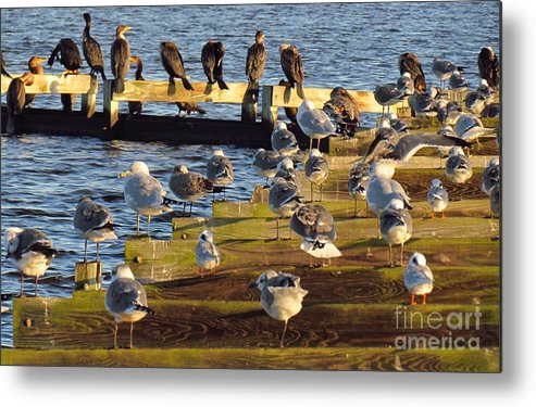 Waterfowl Metal Print featuring the photograph Sunnning by Rrrose Pix