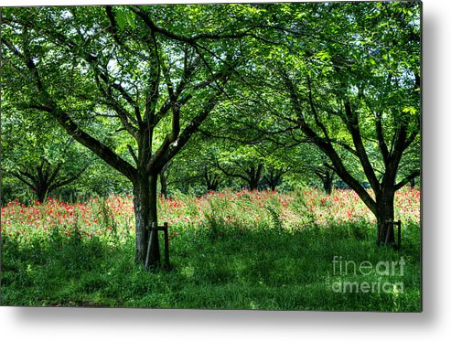Hdr Metal Print featuring the photograph The Hill Where A Poppy Blooms by Tad Kanazaki