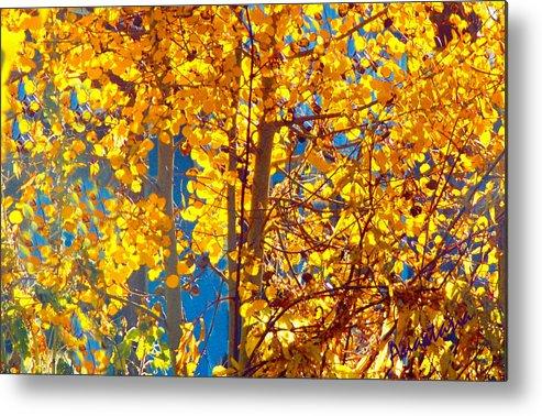 Populus Tremuloides Metal Print featuring the photograph Aspen Glow Autumn Sky by Anastasia Savage Ealy