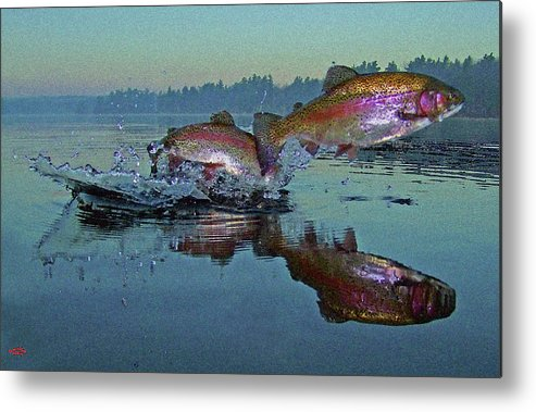 Rainbow Trout Metal Print featuring the photograph Dance Of The Trout by Brian Pelkey