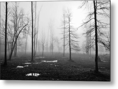 Landscape Metal Print featuring the photograph Foggy Morning by Conn Hutzell