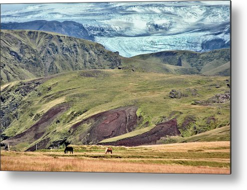 Scenic Metal Print featuring the photograph Glacier Mountains Meadows Horses by David Halperin