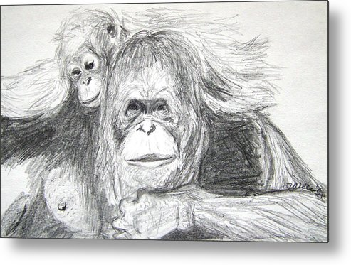 Wildlife Metal Print featuring the drawing Gorillas by Vallee Johnson