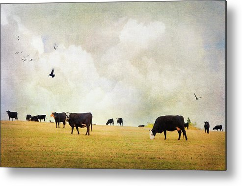 Theresa Tahara Metal Print featuring the photograph How Now Black Cow by Theresa Tahara