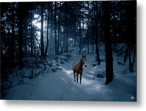 Horse Metal Print featuring the photograph In Blue Wood by Wayne King