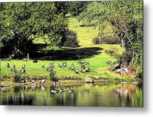Bird Metal Print featuring the photograph Last Days Of Summer by Gaby Swanson