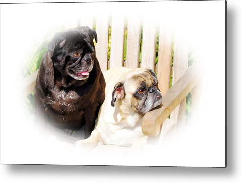 Dog Metal Print featuring the photograph Leroy And Mrs. Jones by Ellen Lerner ODonnell