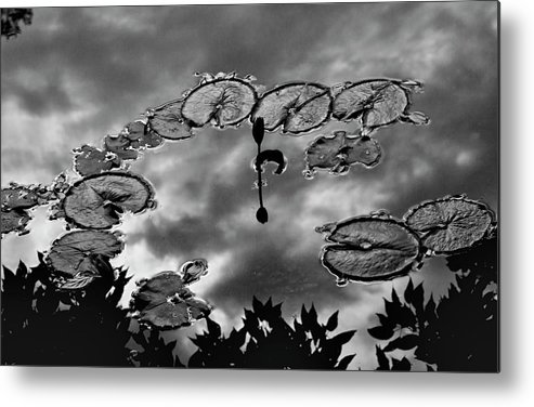 Lily Pads Metal Print featuring the photograph Lily Pads by Robert Ullmann