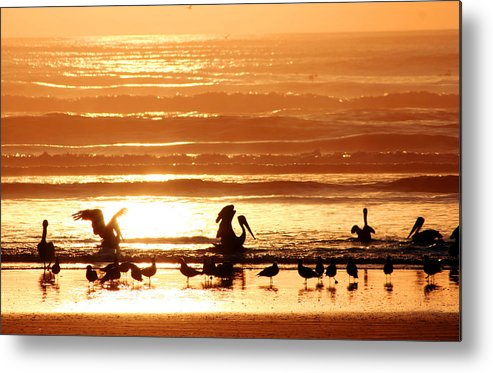 Pelican Metal Print featuring the photograph Pelican Sunset by Kerry Langel