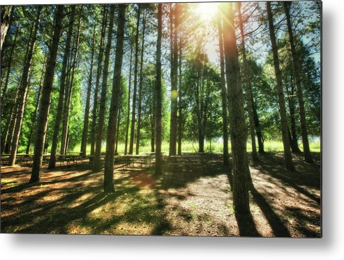 Wisconsin Landscape Metal Print featuring the photograph Retzer Nature Center Pine Trees by Jennifer Rondinelli Reilly - Fine Art Photography
