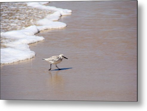 Nature Metal Print featuring the photograph Shorebird by Ty Nichols