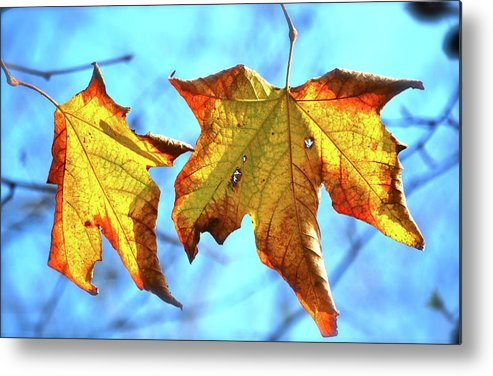 Leaves Metal Print featuring the photograph Signs Of Fall by Lori Leigh