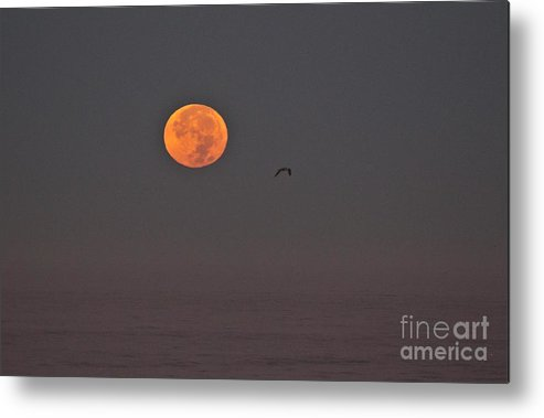 King Tide Metal Print featuring the photograph Superluna Setting by Marta Robin Gaughen