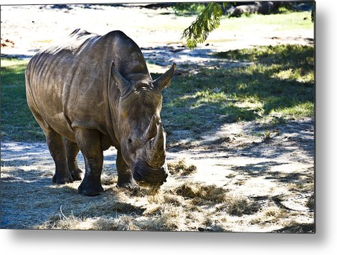Animal Metal Print featuring the photograph Thick Skinned by Sarita Rampersad