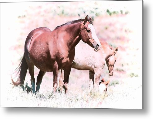 Horses Metal Print featuring the photograph Family Of Horses by Athena Mckinzie