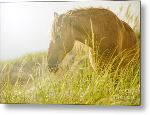 Wild Horse Metal Print featuring the photograph Wild Horse On The Outer Banks by Diane Diederich