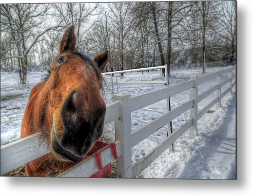 Horse Metal Print featuring the photograph A Horse Is A Horse by Micah Goff