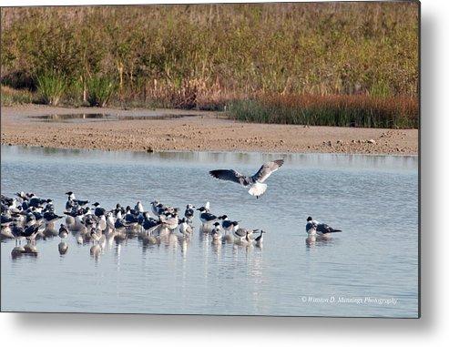 Birds Of Cutler Bay Wetlands Metal Print featuring the photograph Birds Of Cutler Bay Wetlands 42 by Winston D Munnings