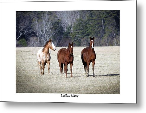 Horses Metal Print featuring the photograph Dalton Gang by Terry Spencer
