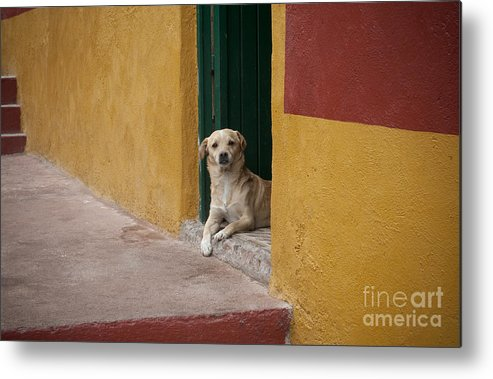 Guanajuato Metal Print featuring the photograph Dog In Colorful Mexican City by John Shaw
