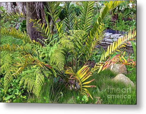 Ancient Plants Metal Print featuring the photograph Ferns II by Kate Brown