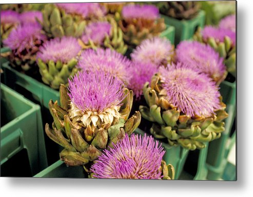 No People; Horizontal; Outdoors; Day; Focus On Foreground; Still Life; Large Group Of Objects; Nature; Flower; Flower Head; Aachen;germany; Artichoke Metal Print featuring the photograph Germany Aachen Munsterplatz Artichoke Flowers by Anonymous