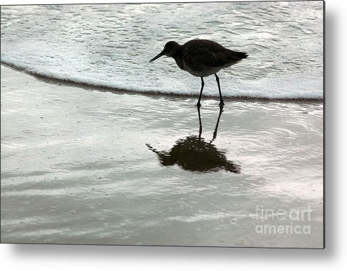Beach Metal Print featuring the photograph Little Footsteps by Dan Holm
