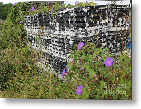 Morning Glories Metal Print featuring the photograph Morning Glories And Crab Traps by Theresa Willingham