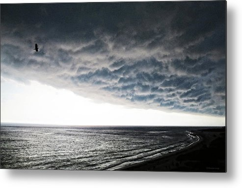Bird Metal Print featuring the painting No Fear - Beach Art By Sharon Cummings by Sharon Cummings