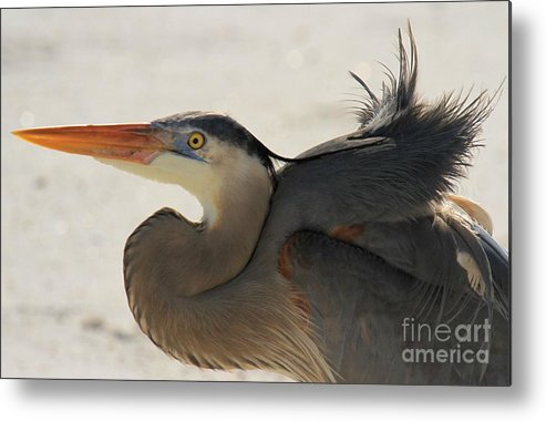 Gulf Islands National Seashore Metal Print featuring the photograph Swoosh by Adam Jewell