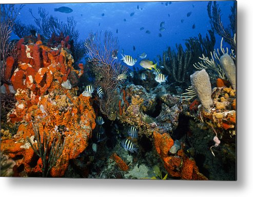 Art Metal Print featuring the photograph The Active Reef by Sandra Edwards
