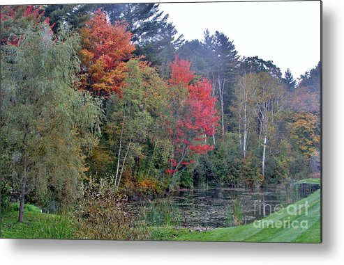 Fall Metal Print featuring the photograph The Change In Life by Butch Phillips
