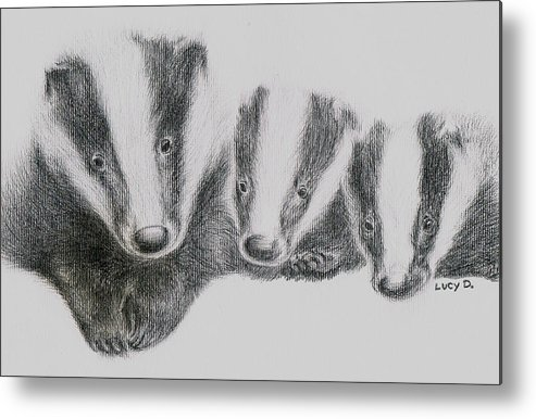 Badgers Metal Print featuring the drawing Badgers by Lucy D