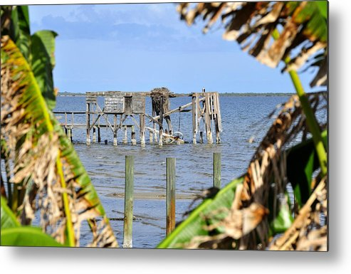 Fine Art Photography Metal Print featuring the photograph Indian River Roost by David Lee Thompson