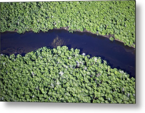 Geography Metal Print featuring the photograph Mangrove River by Alexis Rosenfeld