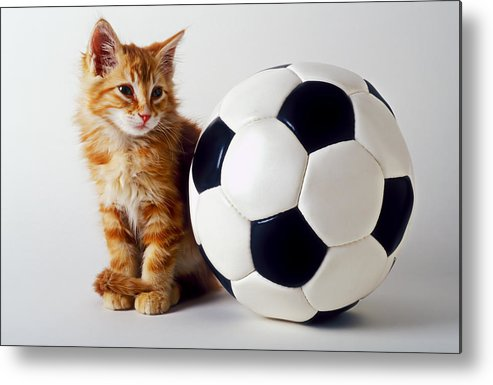 Cat Metal Print featuring the photograph Orange And White Kitten With Soccor Ball by Garry Gay