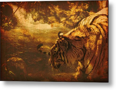 Tiger Metal Print featuring the digital art Tiger In The River by James Wood