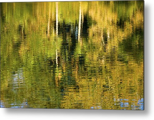 Palms Metal Print featuring the photograph Two Palms Reflected In Water by Rich Franco