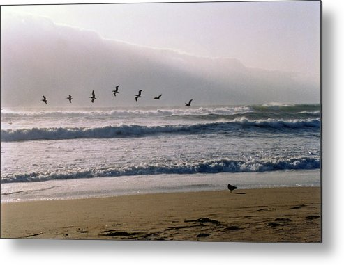 Seascape Metal Print featuring the photograph Pelican Brief by Brande Barrett