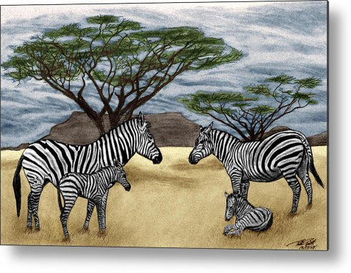Zebra African Outback Metal Print featuring the drawing Zebra African Outback by Peter Piatt