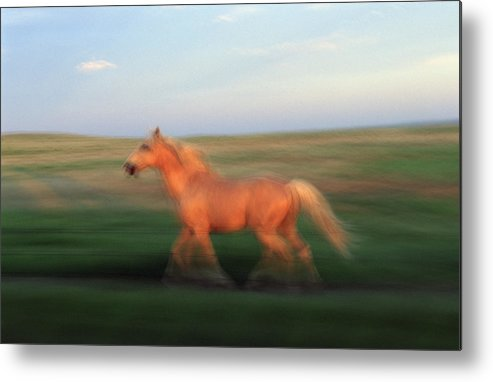 Horse Metal Print featuring the photograph A Horse At Sandal Ranch Near Howes by Joel Sartore
