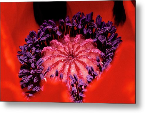 Flowers Metal Print featuring the photograph A Poppy's Heart by Gary Shepard