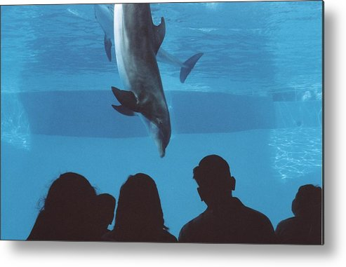 Dolphin Metal Print featuring the photograph Aquarium Dolphin by Wendell Baggett