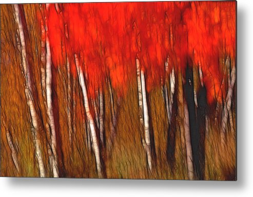 Trees Metal Print featuring the photograph Autumn Fire by Bill Morgenstern