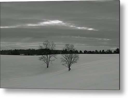 Trees Metal Print featuring the photograph Black And White by Glenn Vidal