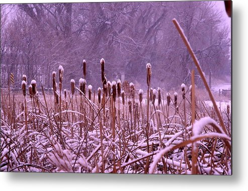 Cattails Metal Print featuring the photograph Cattails Ala Mode by Cynthia Cox Cottam