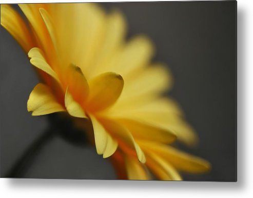 Flower Metal Print featuring the photograph Edges by Dan Holm