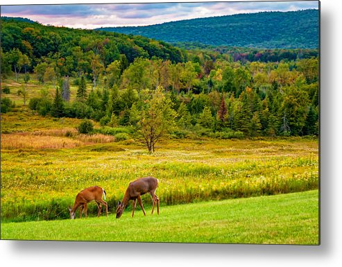 Canaan Valley Metal Print featuring the photograph Evening In The Valley 2 by Steve Harrington